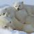 1月の収支 White Bear Z USDJPY